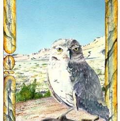 """Burrowing Owl #1 7"""" x 10"""""""