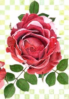 "Red Rose 7"" x 10"""