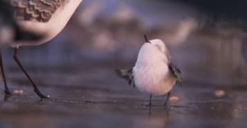 Piper First Look - 鳥可愛いすぎる!ピクサー・アニメーション・スタジオ新作の短編アニメファーストルック!