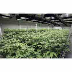 Smart Hydro Growers Like This Norcal Operation Use By Nico Yield 2017 Ultimate Grow Soil Hydro Times Perlite Vs Vermiculite Insulation Perlite Vs Vermiculite Hydroponics houzz 01 Perlite Vs Vermiculite