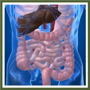 Digestive Health, Intestinal Health