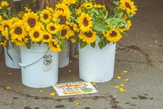 inexpensive sunflowers