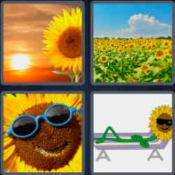 Yellow flowers 4 pics 1 word babangrichie 9 letters 4 pics 1 word gallery letter format formal sample expocarfo Images
