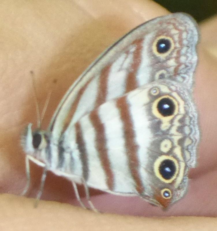 More amazing butterflies.
