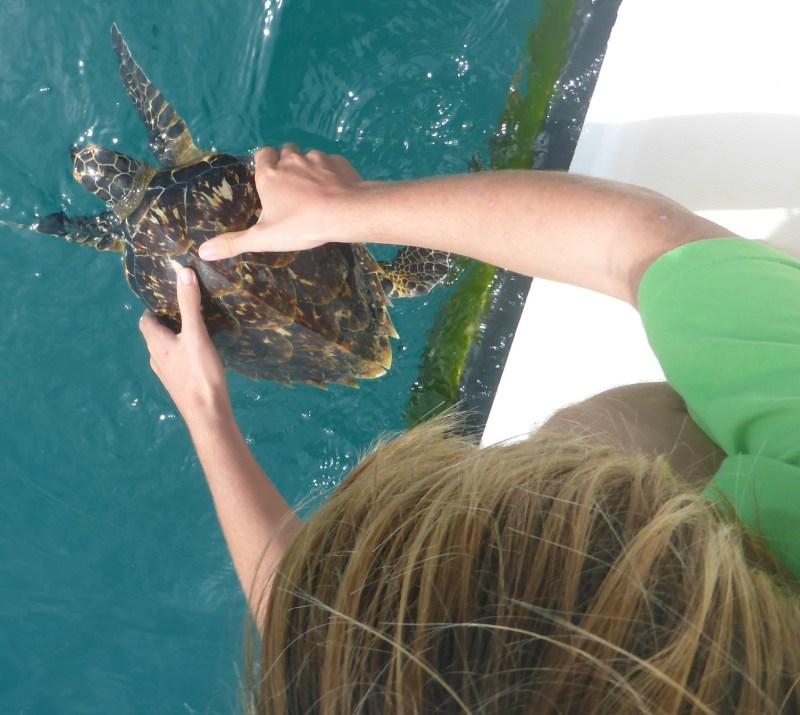 Kylan releasing the first turtle.