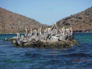 santispac-reef