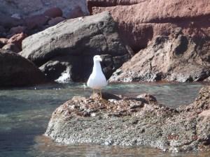 cp-gull-wathcing-us-go-by