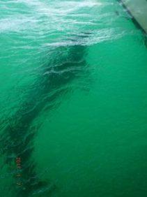 la-paz-dolphin-under-boat