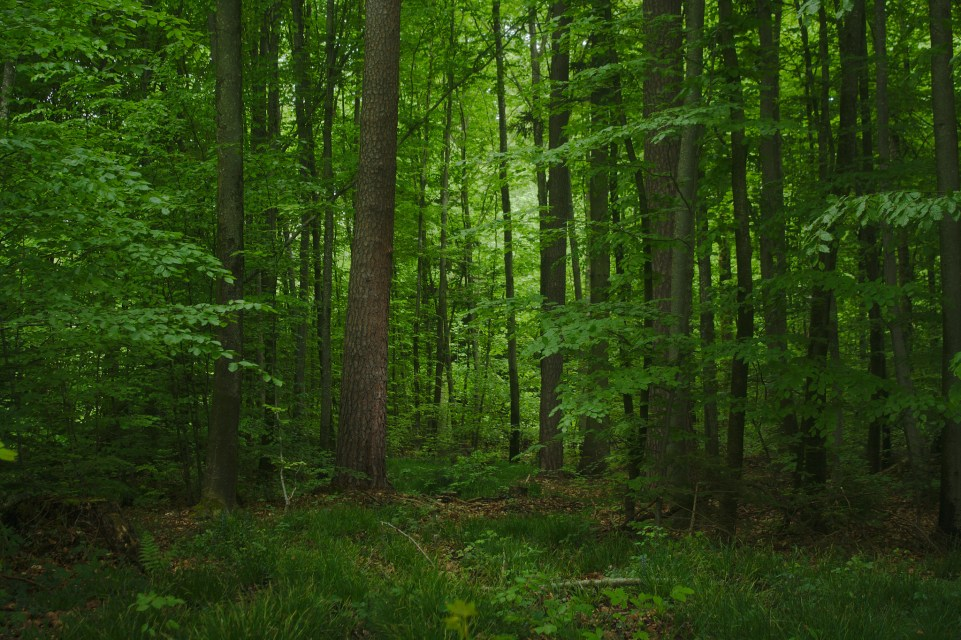 wald-mike-powell-flickr