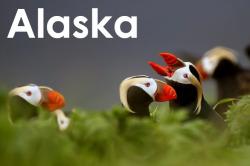 Aleutian Islands, Alaska. I monitored seabird populations, productivity and diets on Aiktak, a tiny Aleutian Island.