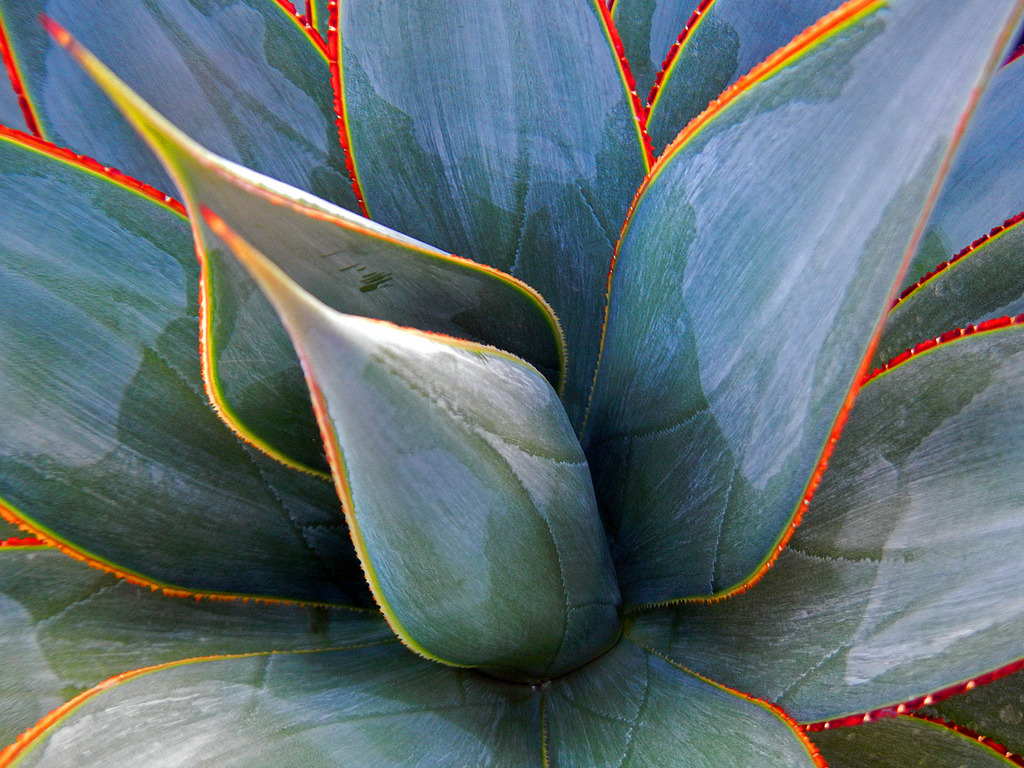 Piquant Sale Uk Agave Blue Glow By Mike Mcallister Collected Images Agave Blue Glow By Mike Mcallister Agave Blue Glow Shade Agave Blue Glow houzz-03 Agave Blue Glow