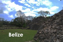 Belize. We studied wintering migrant birds in the Toledo district of southern Belize. To get to one of our study sites, we had to walk through these Mayan ruins.