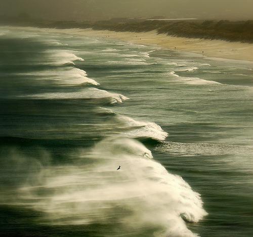 xantheose:Making Waves Dunedin (by _setev)