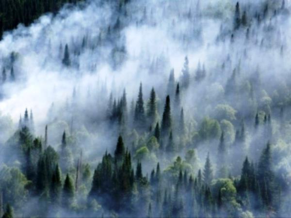 В Иркутской области продолжают гореть более 40 тысяч гектаров леса