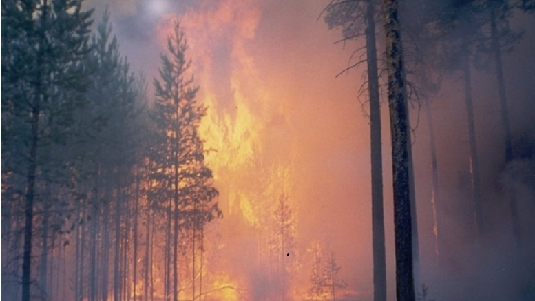 В Красноярском крае лесные пожары приобрели угрожающий характер