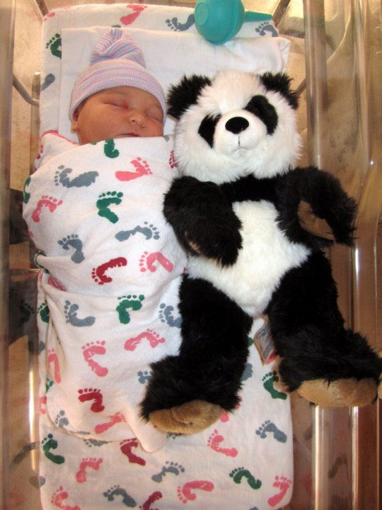 >The Panda Report: Birthday
