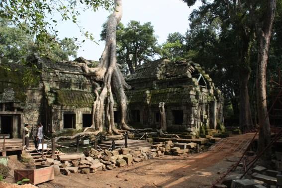 Umwucherte Mauern der Tempelanlage. Foto: Frederic Spohr