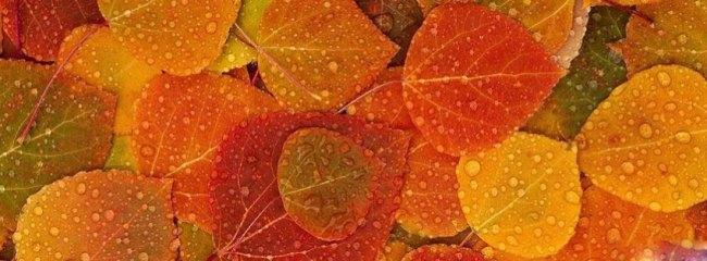 autumn-leaves-background-fa