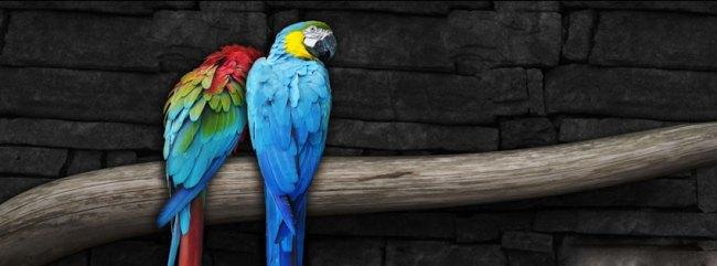 pair_of_parrots-fb-cover