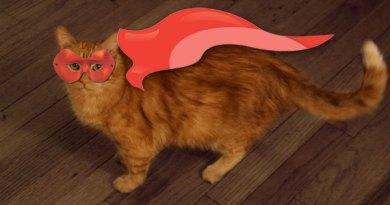 Featured_Catman