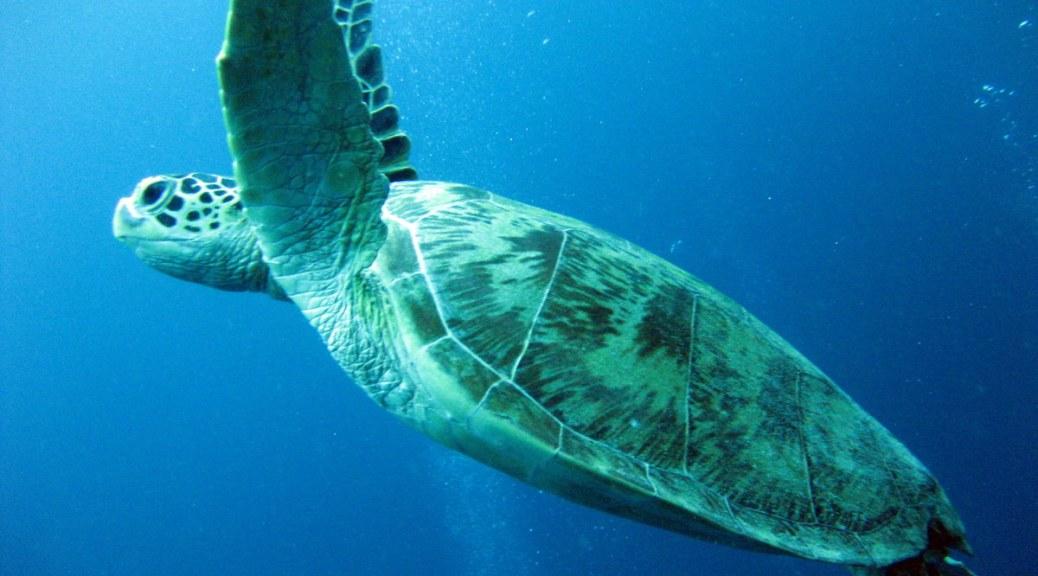Sipadan Diving Borneo-7