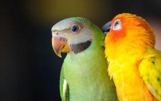 Le cerveau spécial des oiseaux