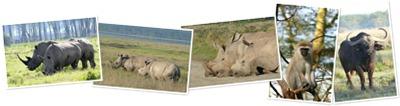 View Nakuru National Park