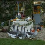 geese_at_inn_op_760x504