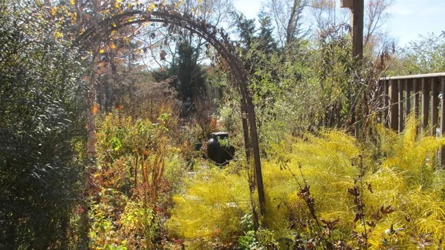 Perennials1.jpg