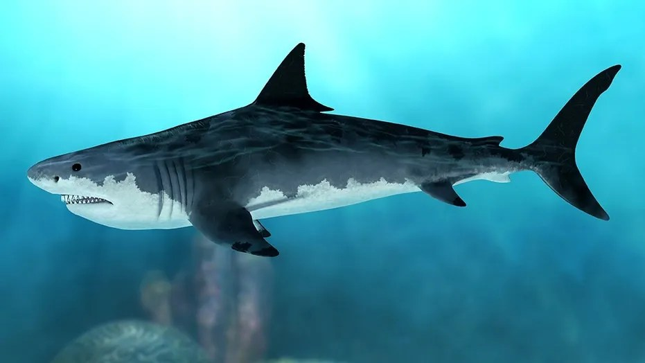 Megalodon  Terrifying facts about this prehistoric monster   Fox News 3D rendering of an extinct Megalodon shark in the seas of the Cenozoic Era