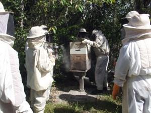 apicultura (98)