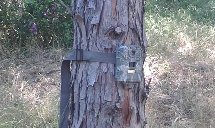Trail Cam Review