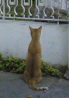 catpeeping.jpg
