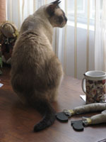 cat_by_the_window.jpg