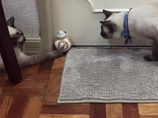 BB8 droid and cats