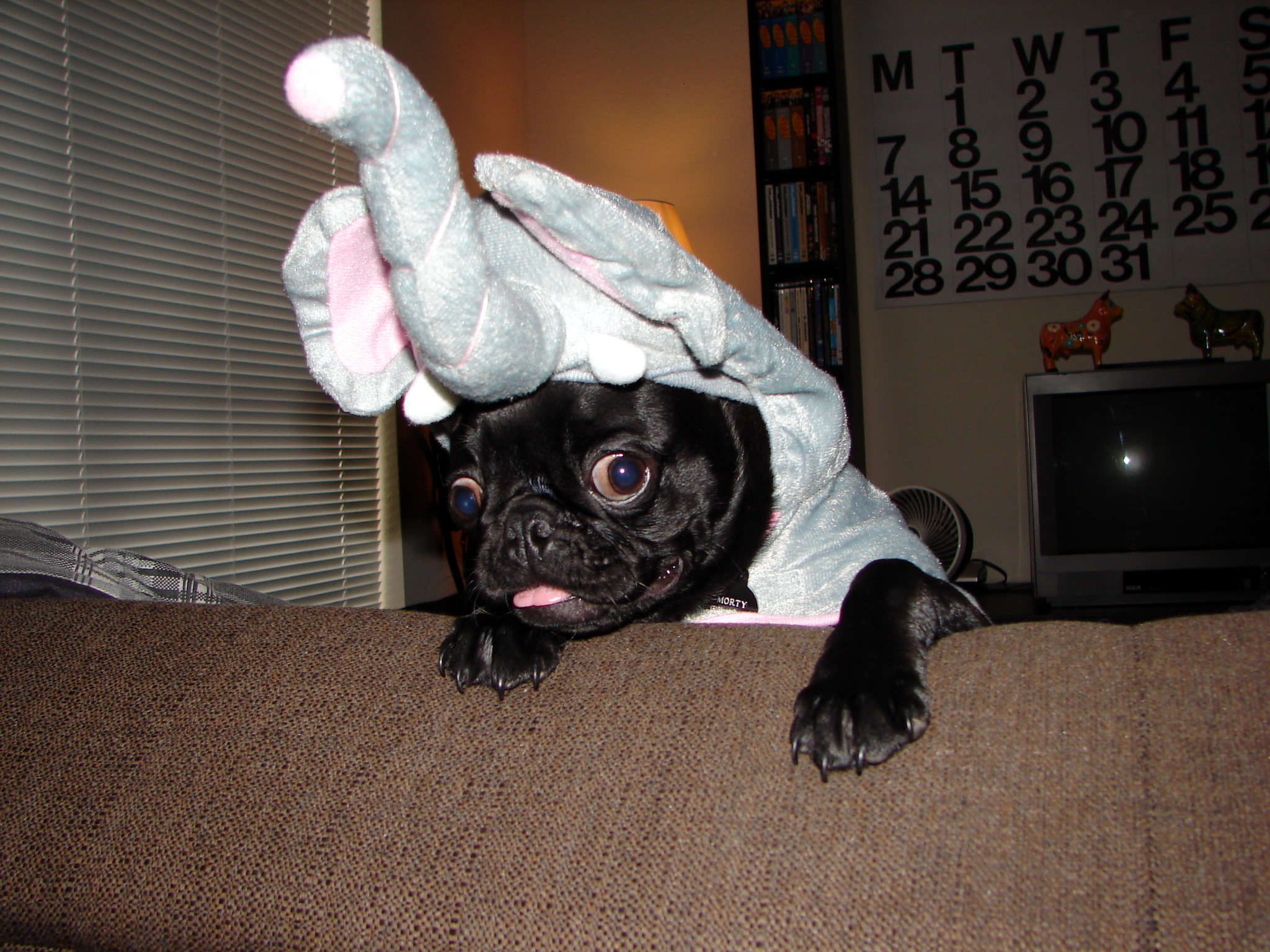 Fullsize Of Pug In Costume