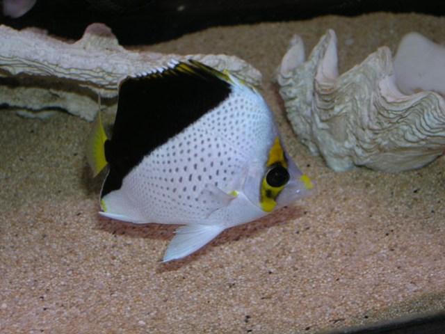 marine fish, aquarium maintenance services and fish tank supplies