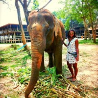 A week in the life of an Elephant Nature Park volunteer