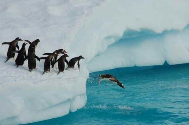 antarctic-penguins-dive