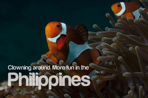 Clownfish all over the Philippines