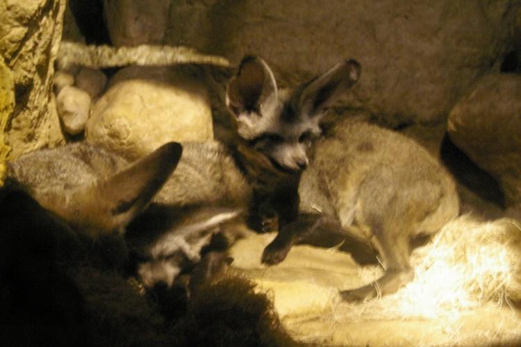 Too Foxy!