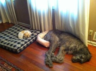 Gatos en cuchas de perros