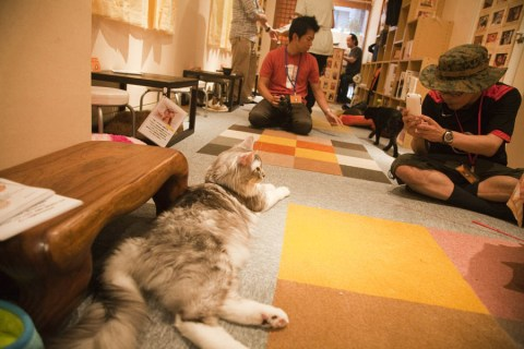 CatCafe010