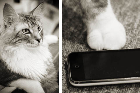 Look at the size of that paw compared to the iPhone!