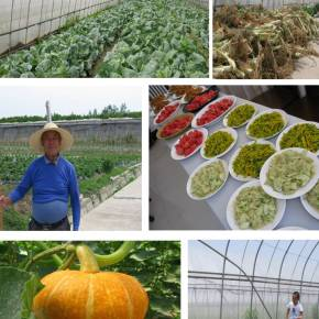 Let's go Farming, China Style - Organic Farms and CSA's in Shanghai