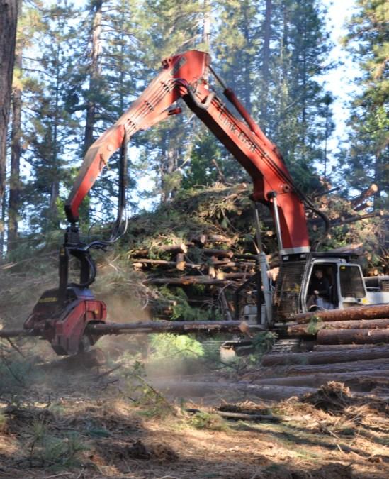Restoring Forests, Changing Lives