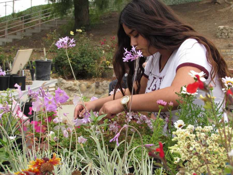 Cam High sophomores reap benefits of annual agricultural contest