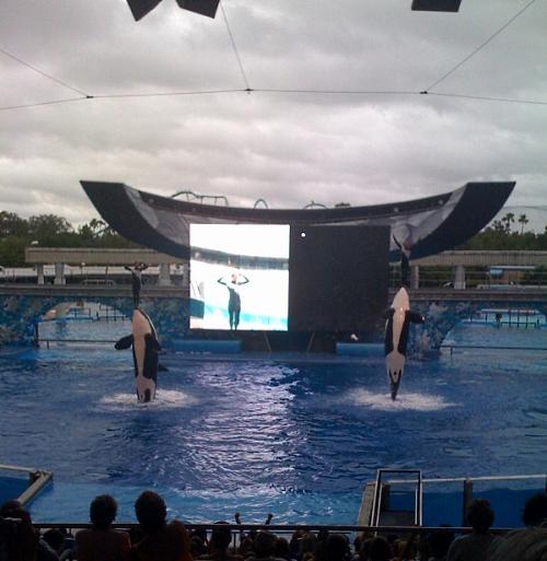 whalesbelieveshow