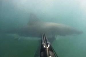 Intense Shark Attack Caught on GoPro