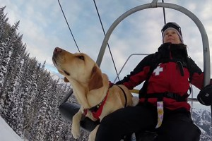 Here's what goes into training avalanche rescue dogs